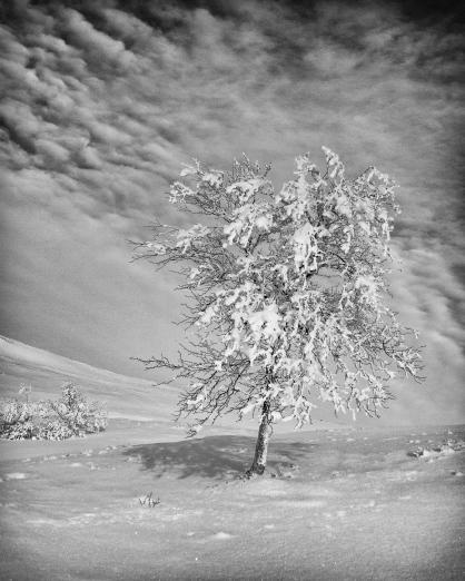 svart-hvitt-10
